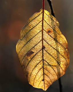 leaf structure | by jenny downing