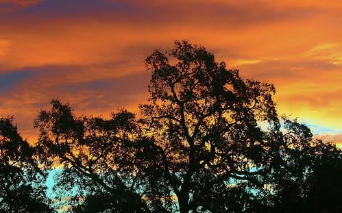 trees tree sunrise napavalley fractalsinnature