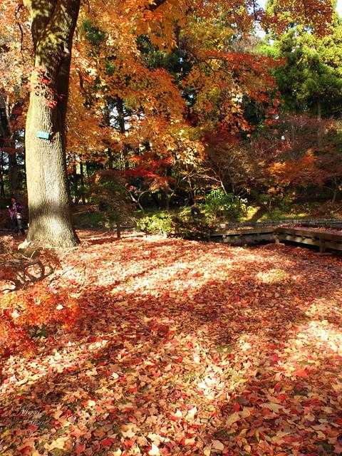 Late Autumn #6