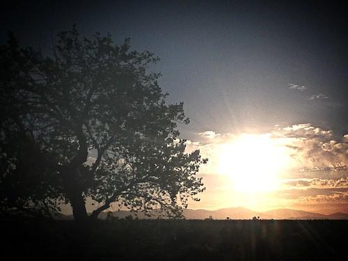 sunset sun sunlight sunrise tree desert clouds scenic leafs mountains treeoflife sky littlerock branchs hills trunk treetrunk
