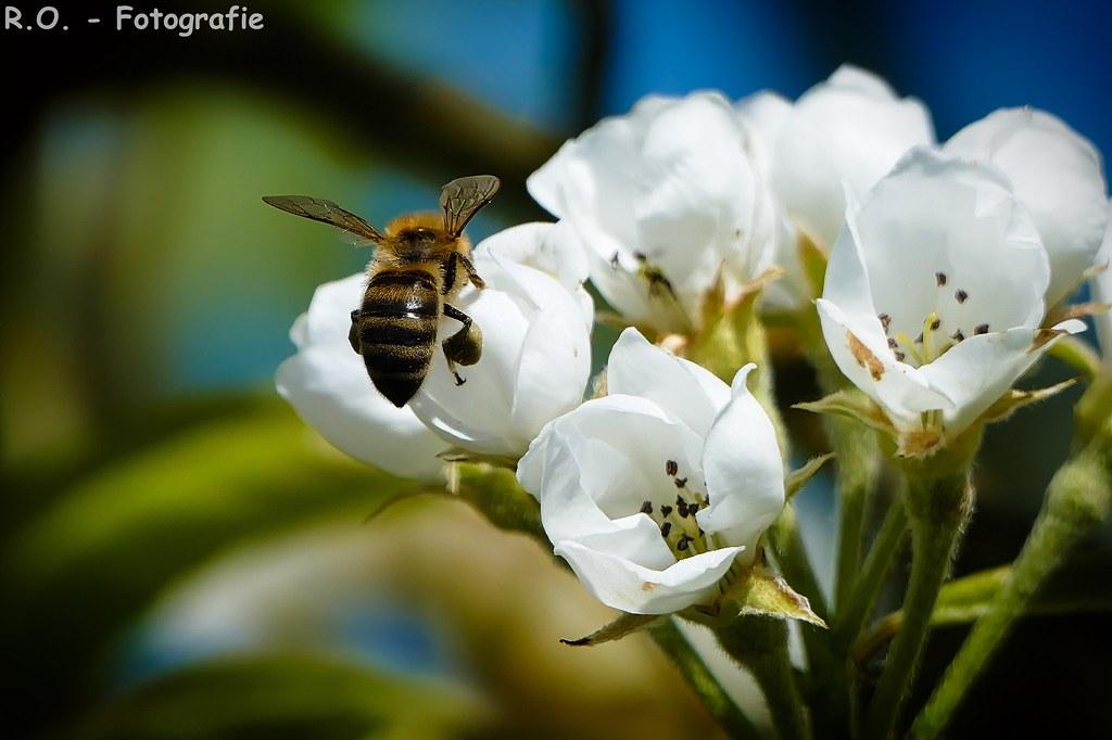 Fleißige Biene / Hardworking Bee