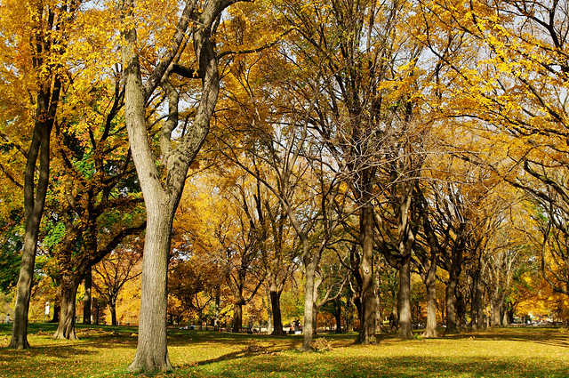 Central Park Autumn 05