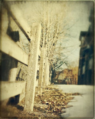 trees winter snow leaves canon vintage fence afternoon bare grung t1i fencefriday
