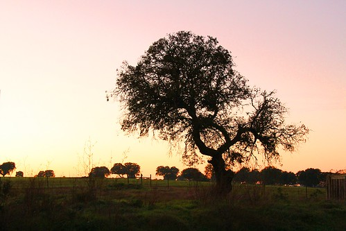 sunset tree silhouette canon eos 7d canon7d