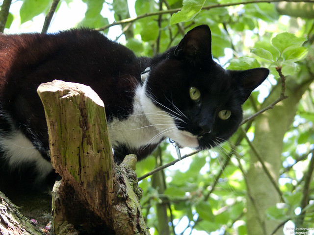 Gizmo in the Trees