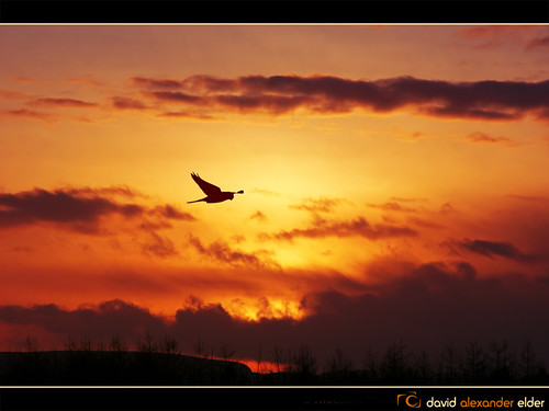 sun david sol angel sunrise photography dawn elder prey alexander angelic heavenly stalking sunbeams sparrowhawk