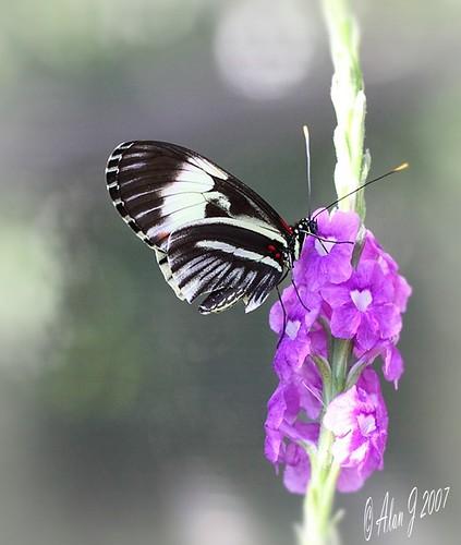 canon butterfly florida 7d flickrsportal 100mmmacrof28lisusm
