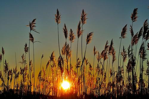 morning winter sky sun grass sunrise nikon connecticut january newengland marsh northeast 2012 southeastern d5000 mygearandme mygearandmepremium mygearandmebronze mygearandmesilver mygearandmegold