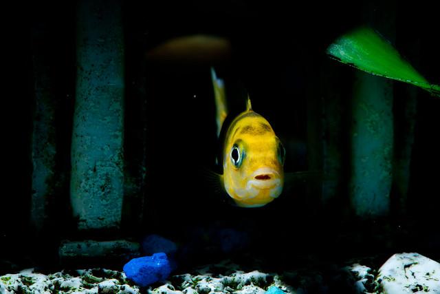 Fishies 2280