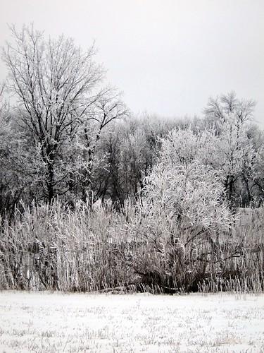 winter frost hoarfrost