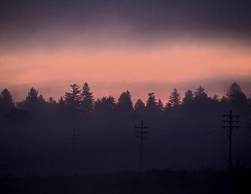 trees mist sunrise utilitypoles