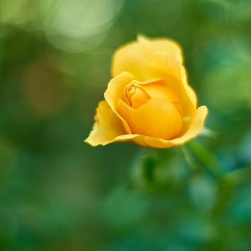 Yellow Time | by ai3310X