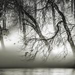 Fog light Trees.