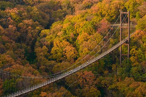 交野市 大阪府 japan 夕景 sunset 森林 forest 橋 bridge 紅葉 autumnleaves