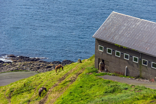 Horses and a stable at Velbastaður, Faroe Islands | by thorrisig