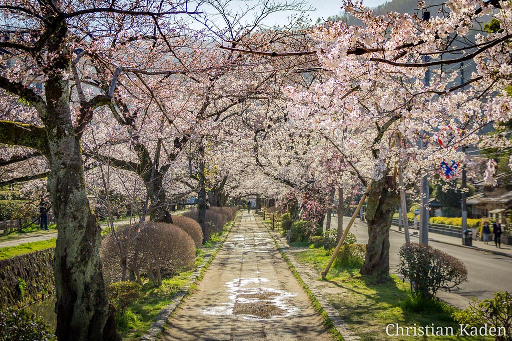 Philosopher's Walk (Tetsugaku no Michi), Kyoto