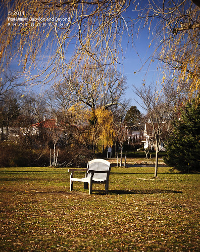 autumn orange fall yellow bench caitlin nikon watching foliage always remembrance babylon boyle babylonvillage nikond90 caitlinboyle caitlinannboyle
