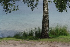 lakeside tree