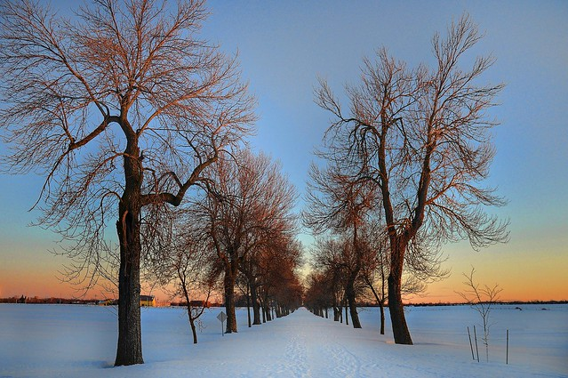 Winter scenes in Ottawa