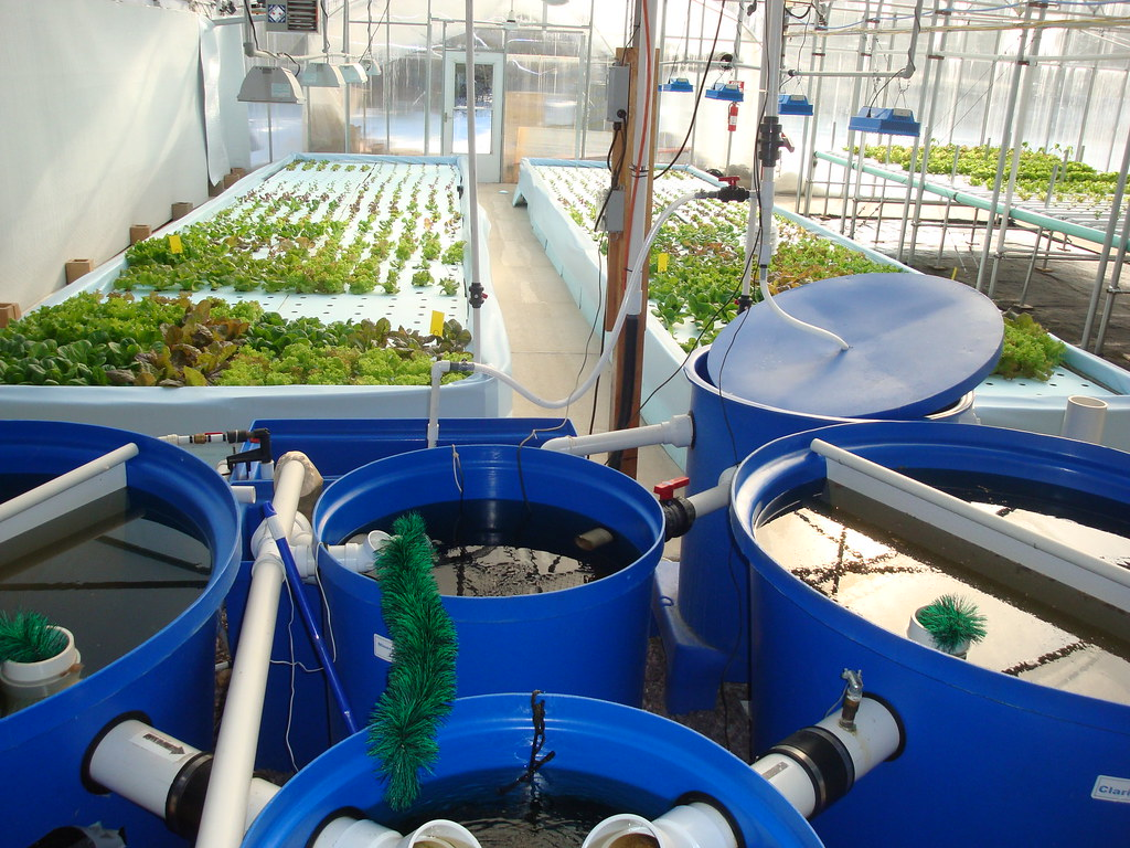 Nelson and Pade Clear Flow Aquaponics System