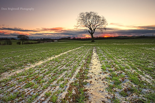 uk england tree ice field grass sunrise landscape sony sigma northeast manfrotto countydurham wingate peterlee