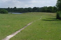 grass field path