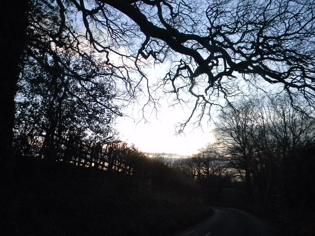Hedgerow and branches Aldermaston to Woolhampton