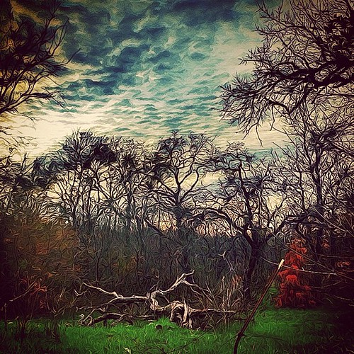 trees winter light sunset sky stilllife usa tree art luz sol digital rural square landscape photography photo yahoo dallas blog google interesting flickr pretty solitude texas foto arboles view arte photos random unique tx scenic vivid paisaje fotos squareformat variety camerabag fortworth interesante grapevine pintura spontaneous iphone fotografía eeuu earlybird prohdr iphoneography shockmypic gogoloopie instagram instagramapp uploaded:by=instagram deeashley dionneashley shehadpotential salidodelsol foursquare:venue=4a7746f5f964a52008e41fe3