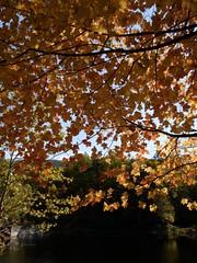 日, 2010-10-17 13:57 - Doodletown 貯水池脇の紅葉