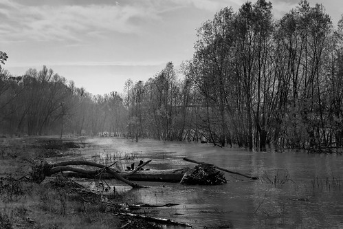 southernuniversity mississippiriver water river louisiana batonrouge riverbank scottsbluff nature landscape canonef28135mmf3556isusm 60mm morning bw blackandwhite scotlandville mrgreenjeans gaylon gaylonkeeling