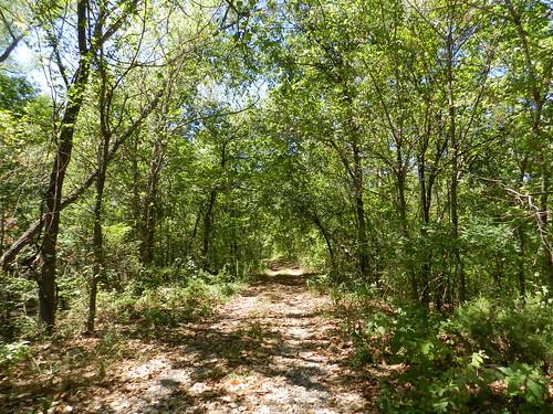 trees green forest trail bellavista jungle arkansas