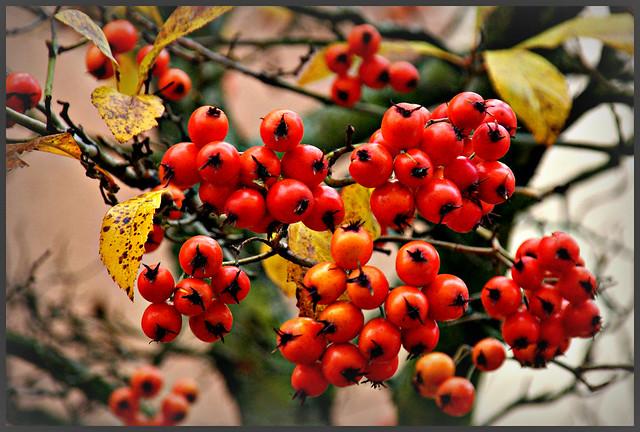 december fruits