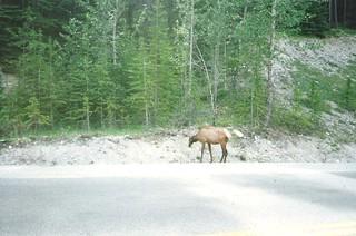 Canada 1996 (2)