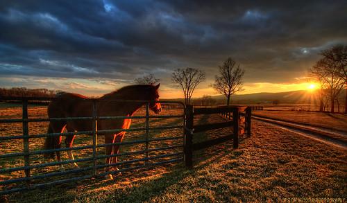 winter sunset horse usa mountain storm tree clouds landscape virginia nikon pastoral lovettsville loudouncounty tomlussier farmsandfoodpec2012