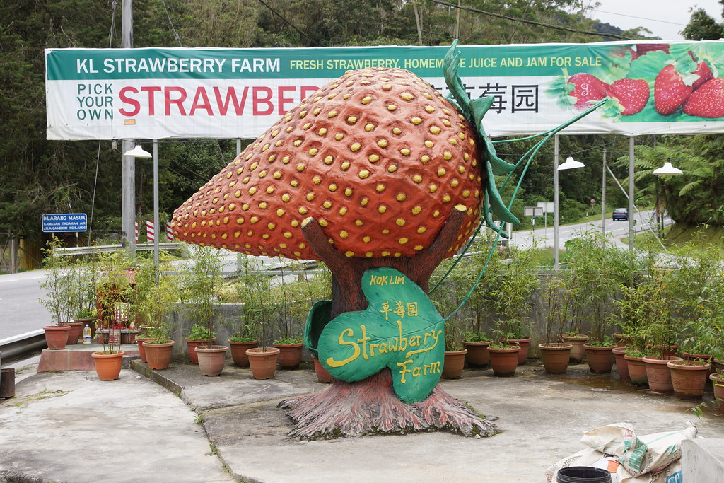 Kok Lim Strawberry Farm Dear Mr Kok Lim You Are Charging Flickr
