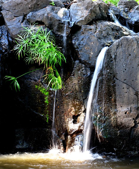 Nuuanu Stream near Lili'uokalani Park  ≡  Eric Tessmer, Molokai, Hawaii