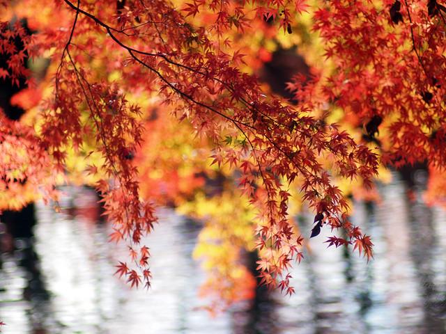 Late Autumn #3