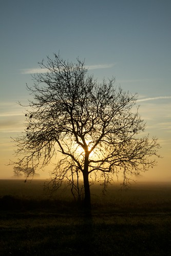 tree silhouette sunrise canonefs1785mmf456isusm