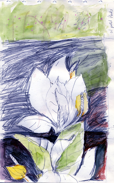 pen and watercolour sketch of yellow Skunk Cabbage