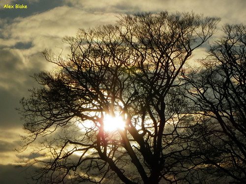 tree silhouette swansea wales sunrise singletonpark