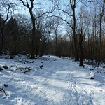 Snow covered woodland and ride