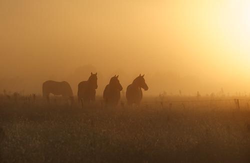 horse sunrise three