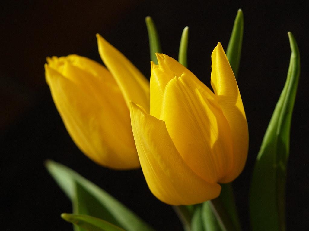 Lighting yellow