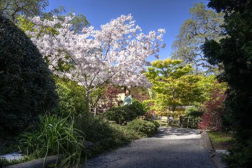 hakonegardens saratoga california sakura japanesegarden garden hdr 3xp raw nex6 photomatix fav50 siliconvalley sanfranciscobay