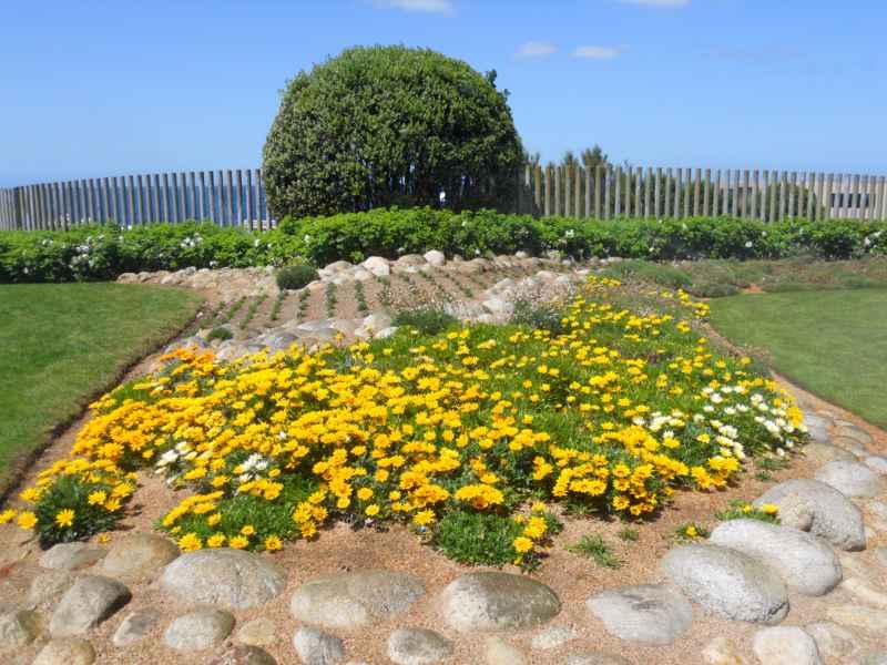 Jardin con plantas y piedra decorativa 5