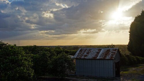 city trees sunset orange tree sunshine saint st rust shine view leo florida shack dade