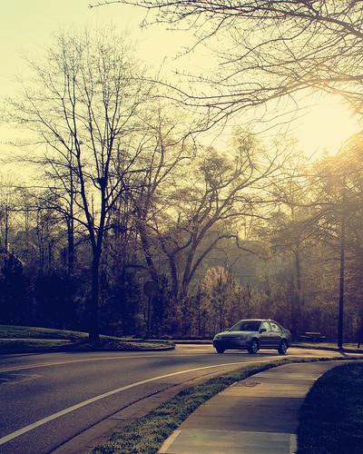 road trees sun tree nature car sunrise canon georgia alpharetta