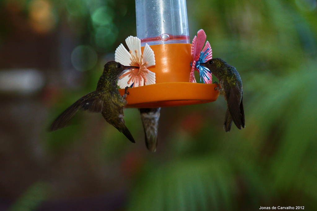 Jardim dos beija-flores, Puerto Iguazu, Argentina