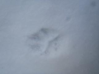 Animal Tracks   by Wavesonics