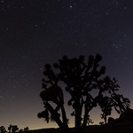 Stars of Joshua Tree NP